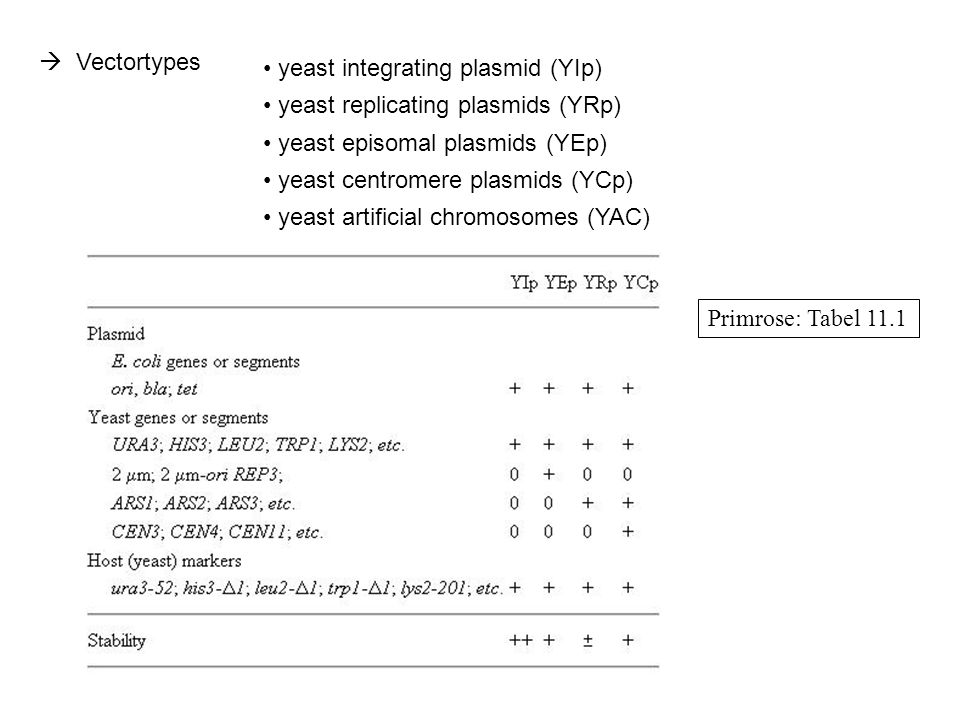  Vectortypes yeast integrating plasmid (YIp) yeast replicating plasmids (YRp) yeast episomal plasmids (YEp)