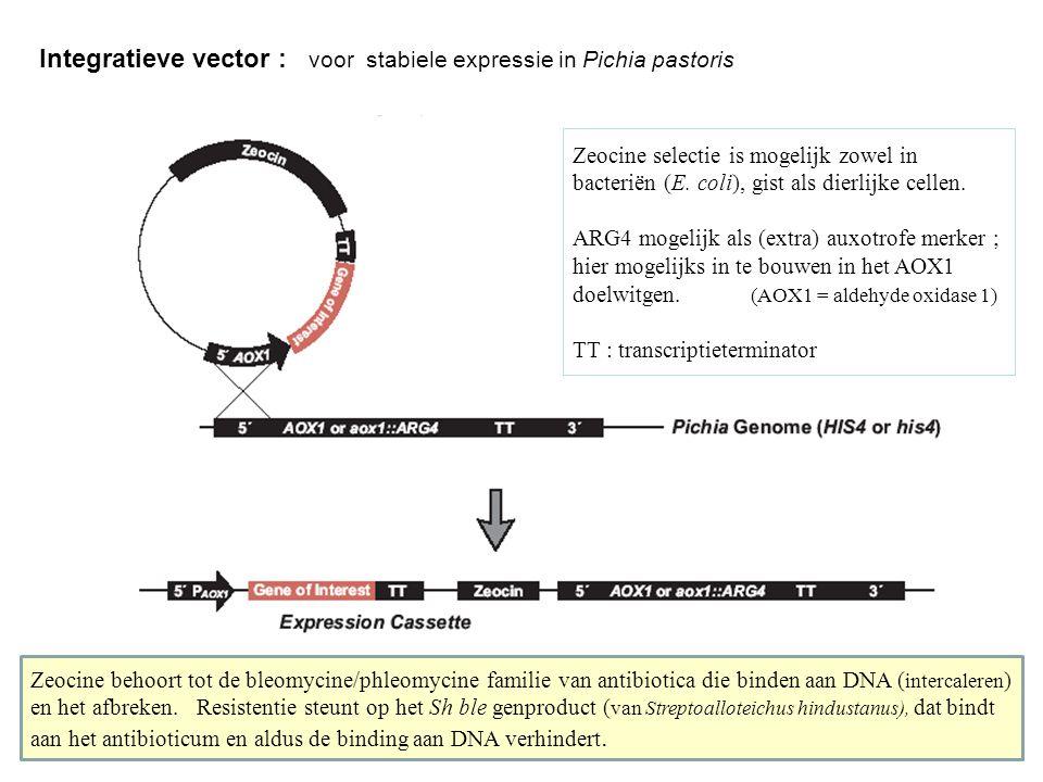 Integratieve vector : voor stabiele expressie in Pichia pastoris