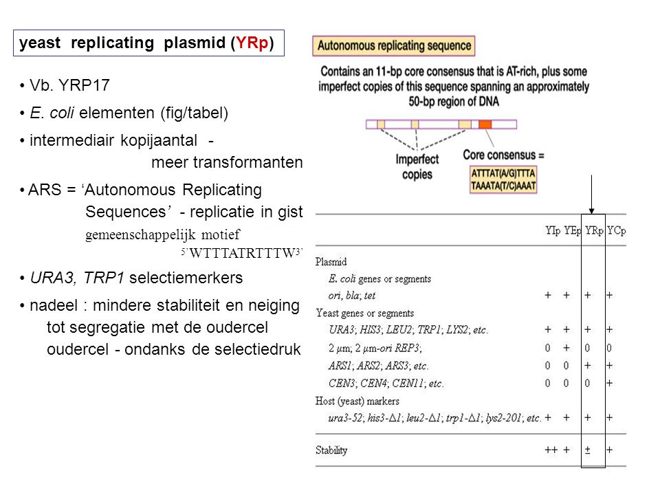 yeast replicating plasmid (YRp)