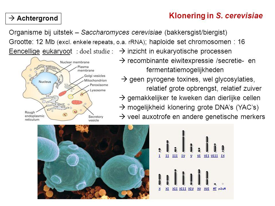 Klonering in S. cerevisiae
