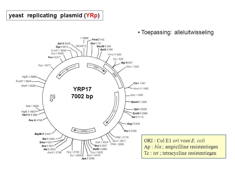yeast replicating plasmid (YRp)
