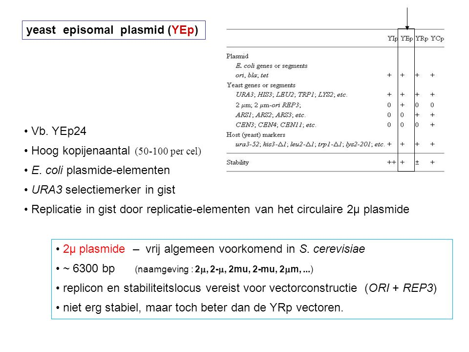 yeast episomal plasmid (YEp)