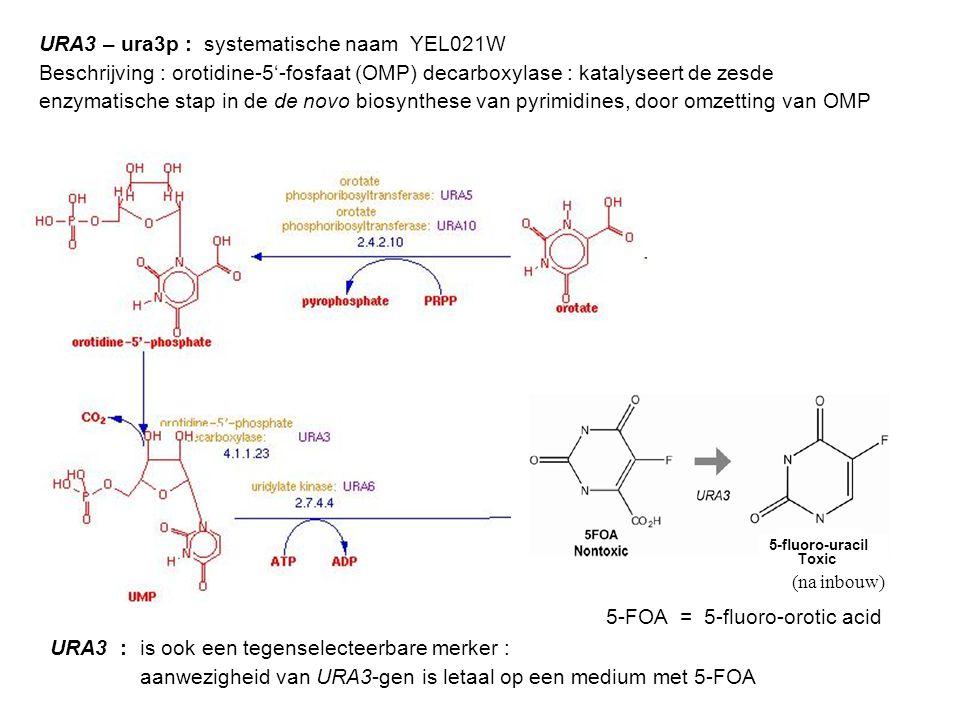 URA3 – ura3p : systematische naam YEL021W
