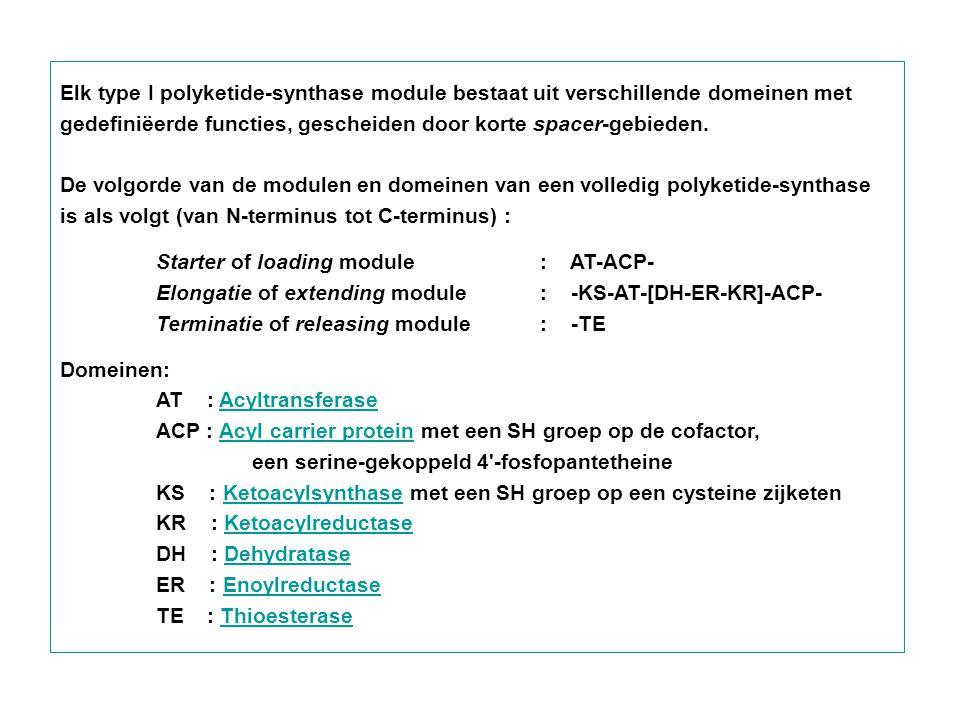Elk type I polyketide-synthase module bestaat uit verschillende domeinen met gedefiniëerde functies, gescheiden door korte spacer-gebieden.