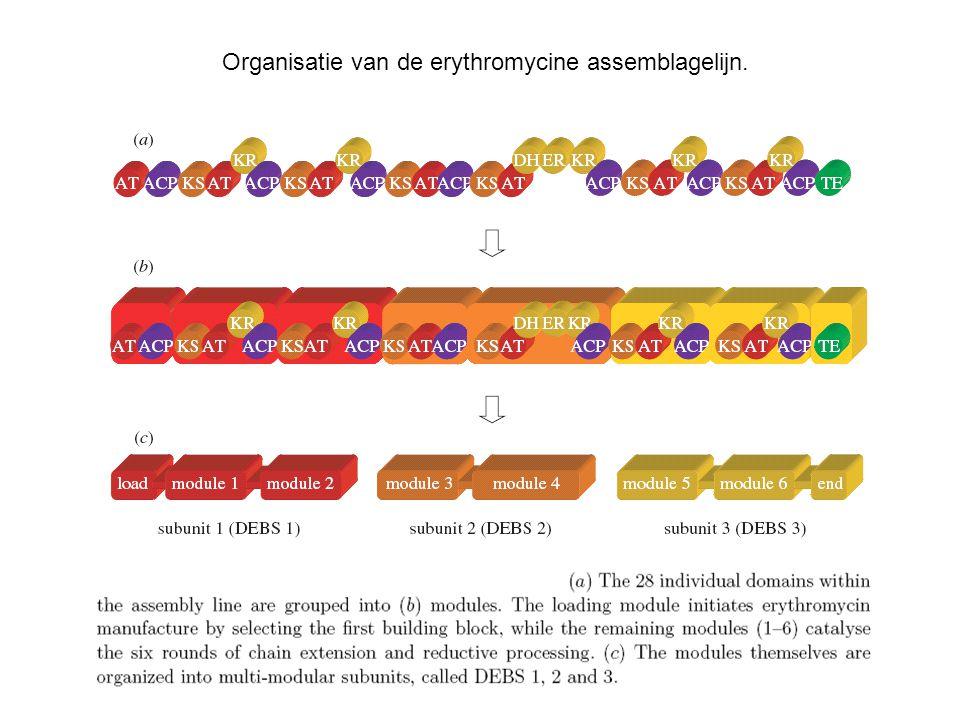 Organisatie van de erythromycine assemblagelijn.