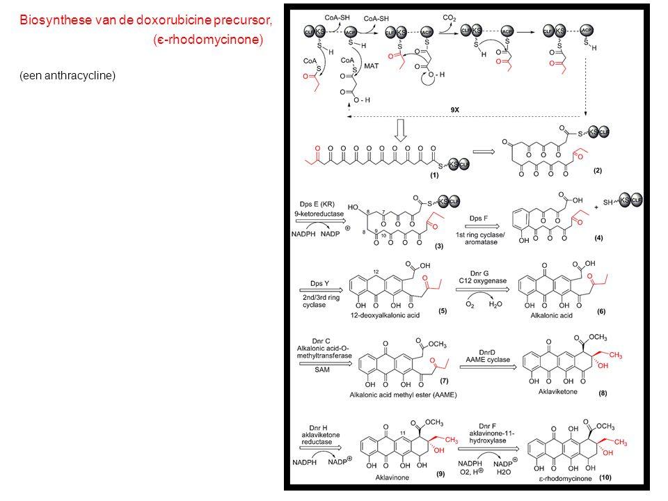 Biosynthese van de doxorubicine precursor, (є-rhodomycinone)