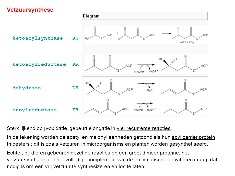 Vetzuursynthese ketoacylsynthase KS ketoacylreductase KR dehydrase DH
