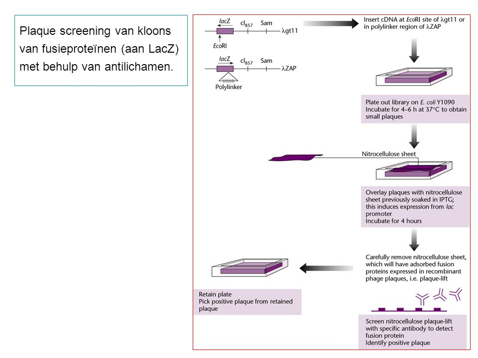 Plaque screening van kloons