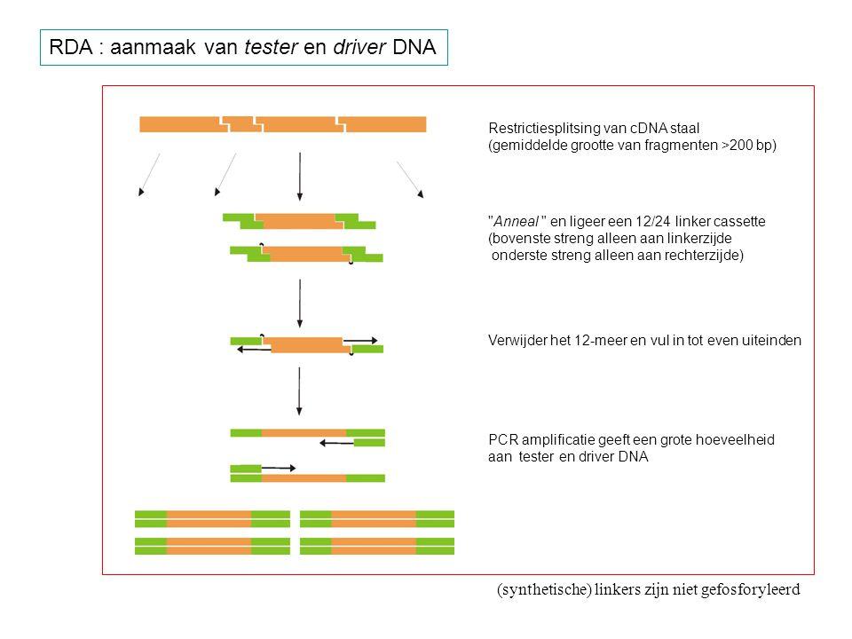RDA : aanmaak van tester en driver DNA