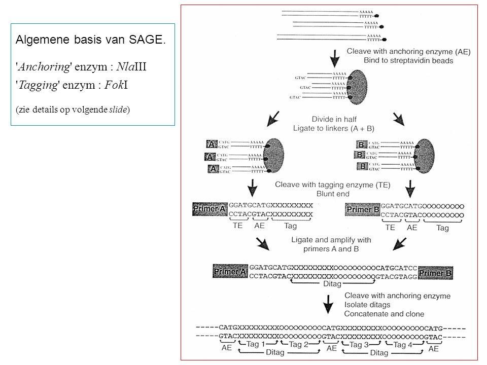 Algemene basis van SAGE. Anchoring enzym : NlaIII