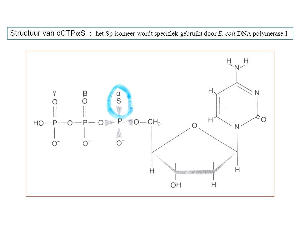 Structuur van dCTPaS : het Sp isomeer wordt specifiek gebruikt door E