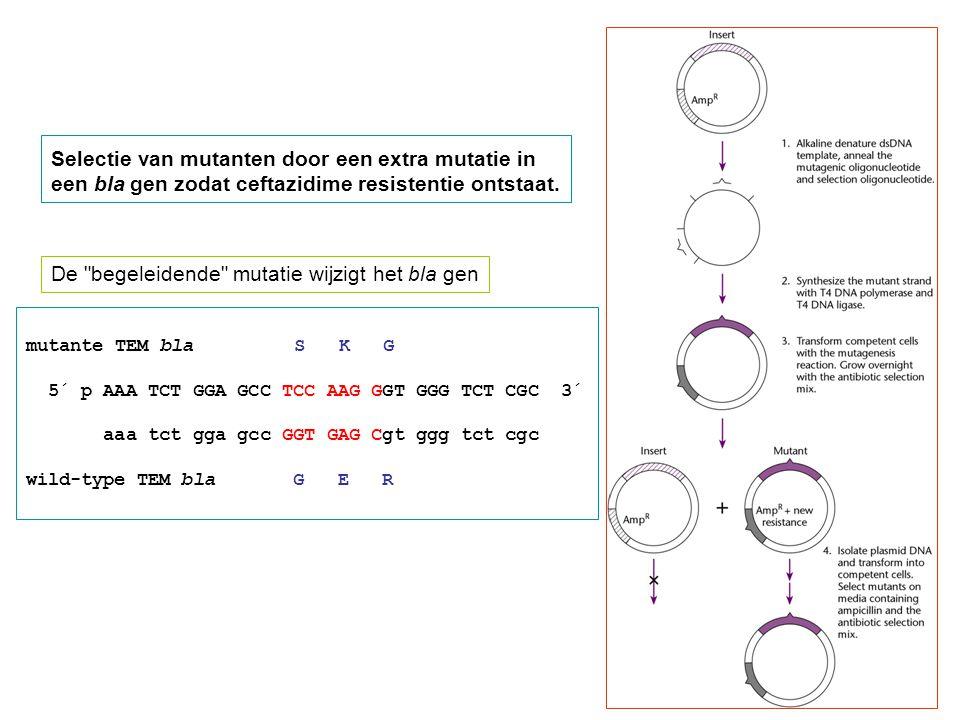 Selectie van mutanten door een extra mutatie in