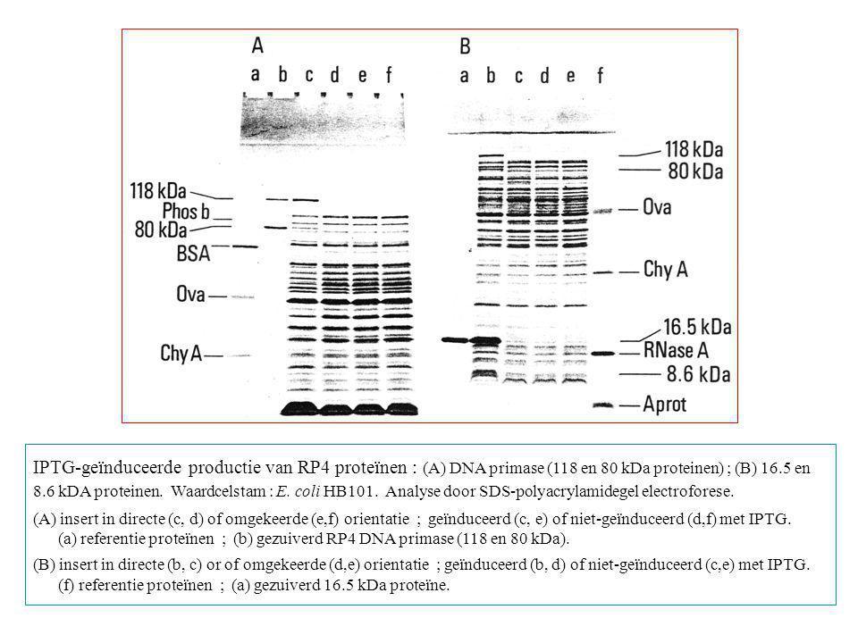 IPTG-geïnduceerde productie van RP4 proteïnen : (A) DNA primase (118 en 80 kDa proteinen) ; (B) 16.5 en