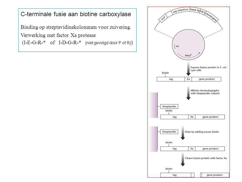 C-terminale fusie aan biotine carboxylase