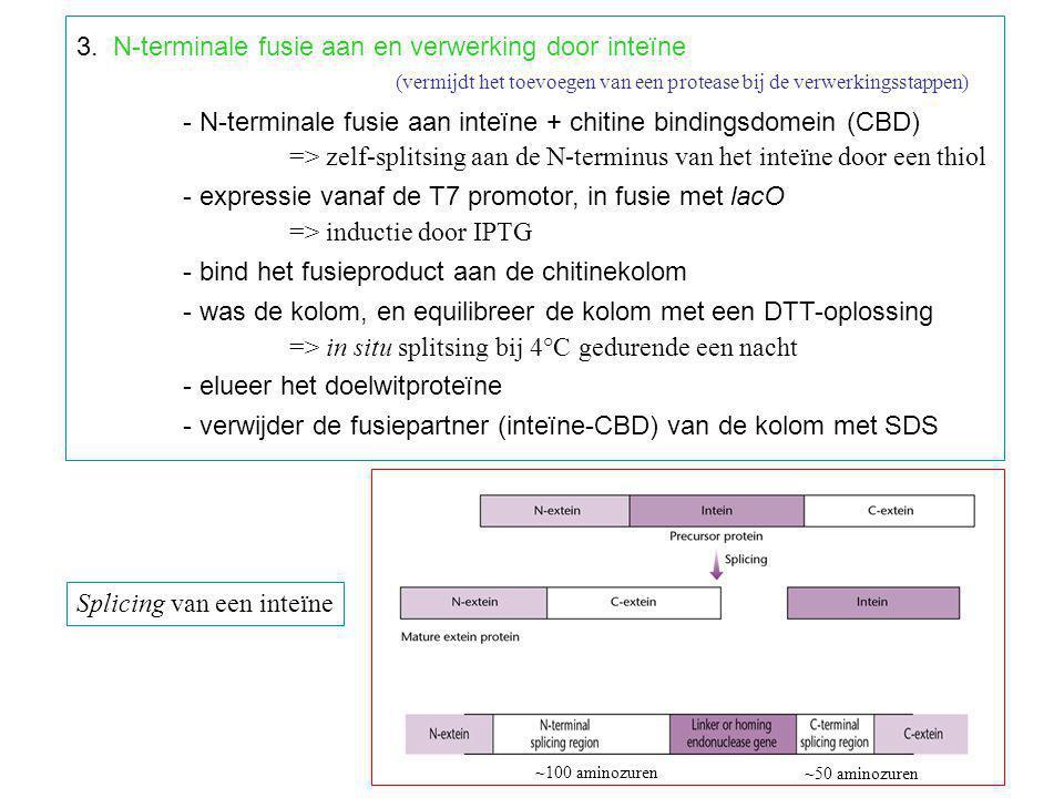 3. N-terminale fusie aan en verwerking door inteïne