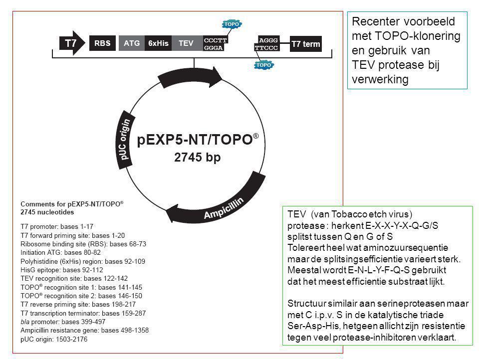Recenter voorbeeld met TOPO-klonering en gebruik van TEV protease bij