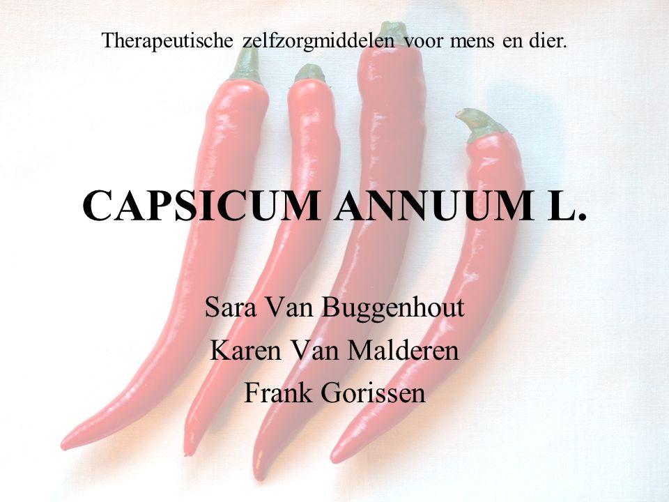 Sara Van Buggenhout Karen Van Malderen Frank Gorissen