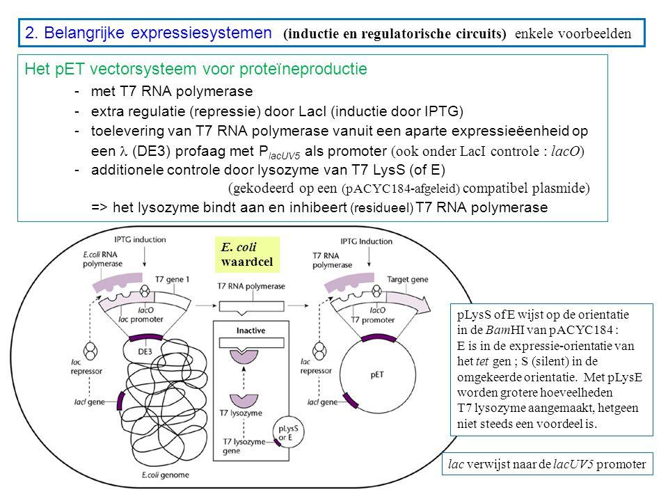 Het pET vectorsysteem voor proteïneproductie