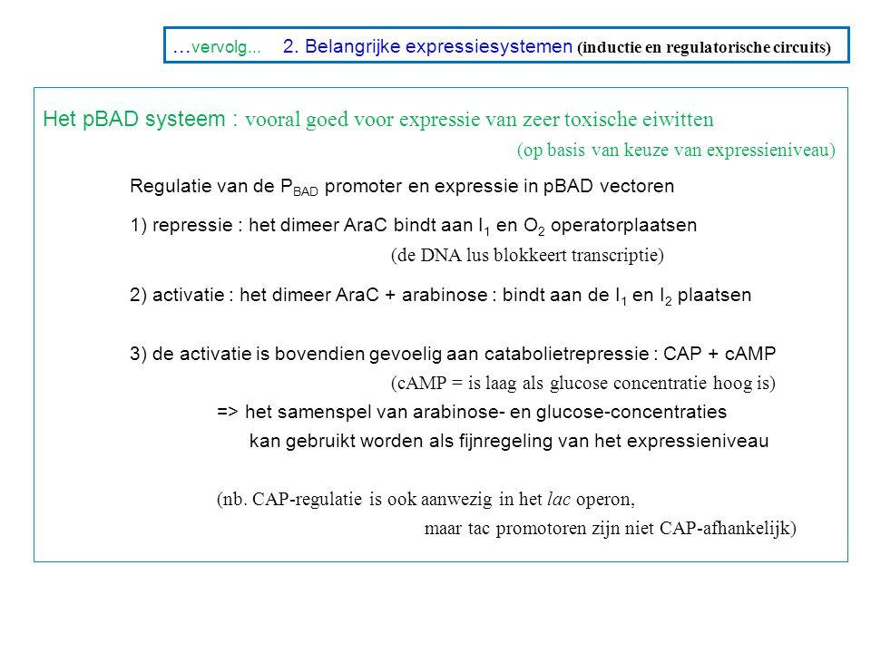 1) repressie : het dimeer AraC bindt aan I1 en O2 operatorplaatsen