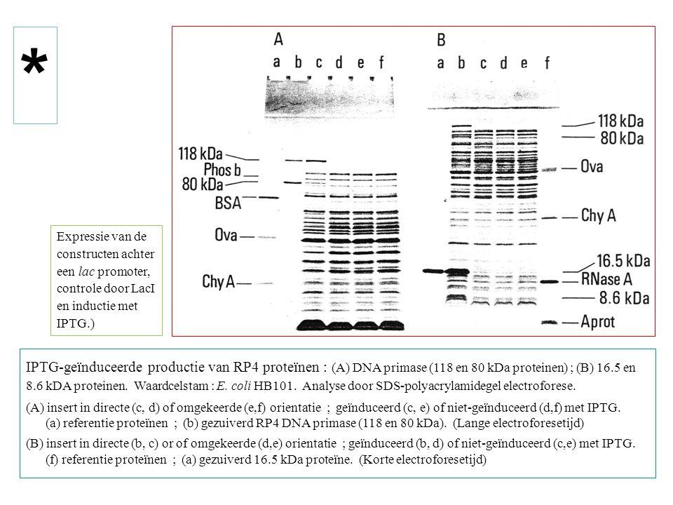 * Expressie van de. constructen achter. een lac promoter, controle door LacI. en inductie met. IPTG.)