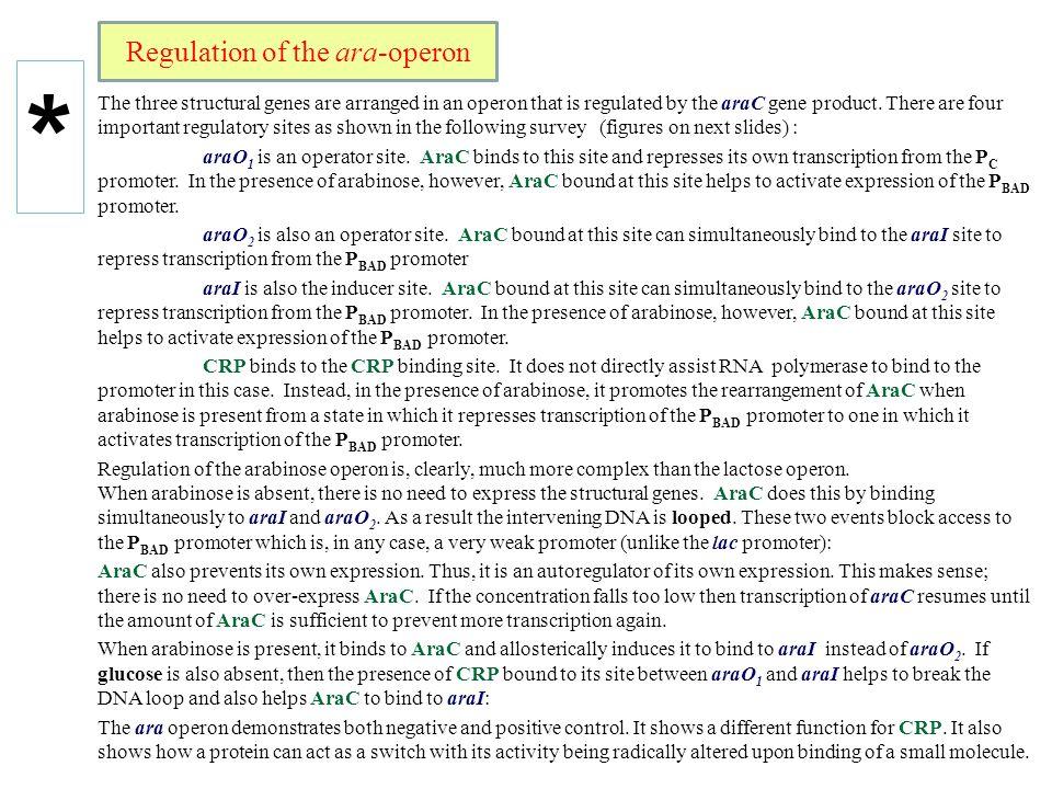 Regulation of the ara-operon