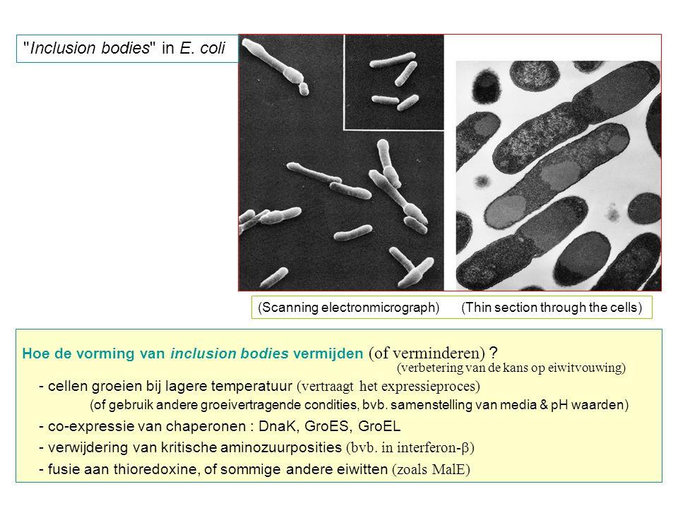 Inclusion bodies in E. coli