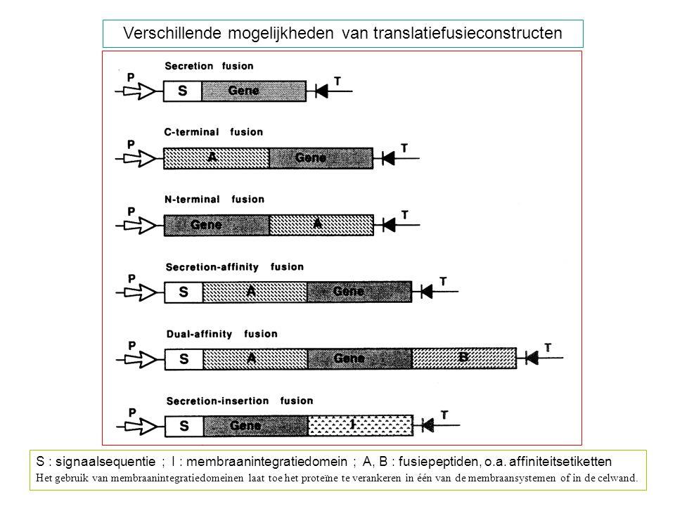 Verschillende mogelijkheden van translatiefusieconstructen
