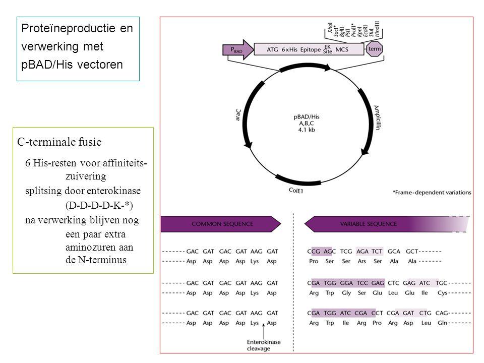 Proteïneproductie en verwerking met pBAD/His vectoren