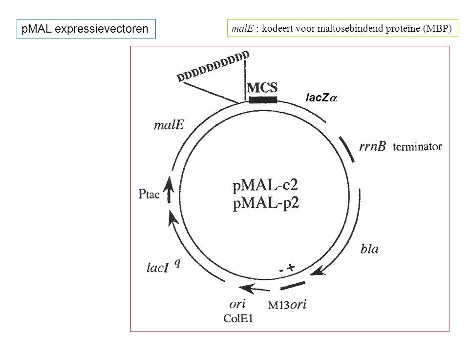 pMAL expressievectoren