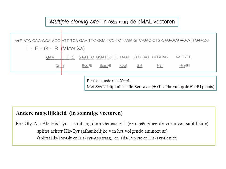 Multiple cloning site in (één van) de pMAL vectoren
