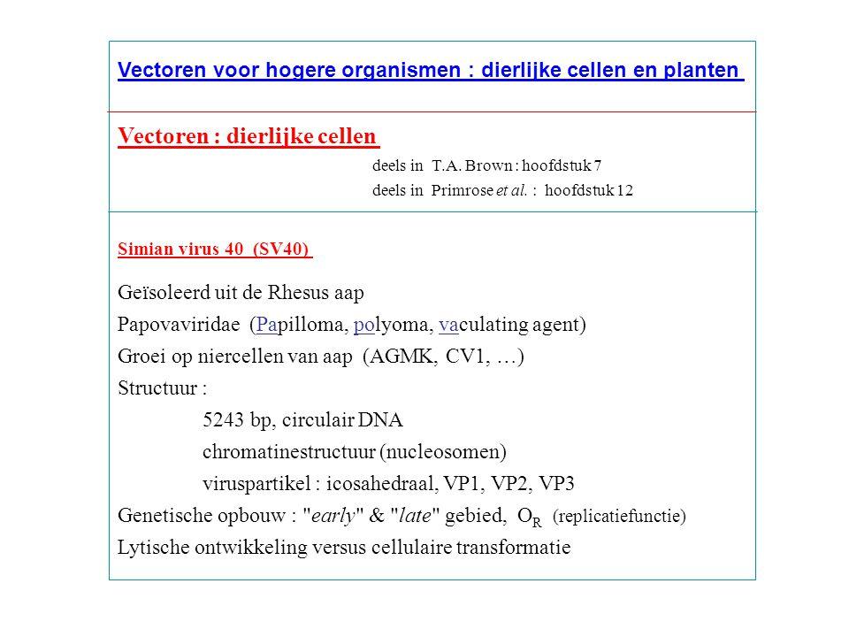 Vectoren : dierlijke cellen