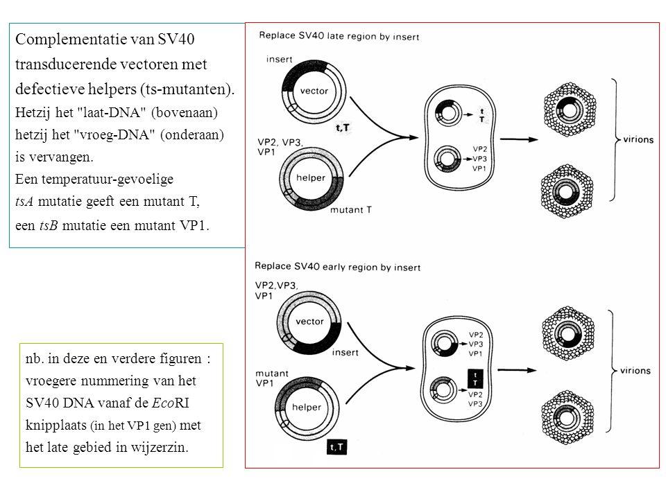transducerende vectoren met defectieve helpers (ts-mutanten).