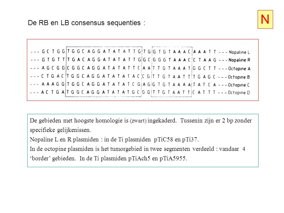 N De RB en LB consensus sequenties :