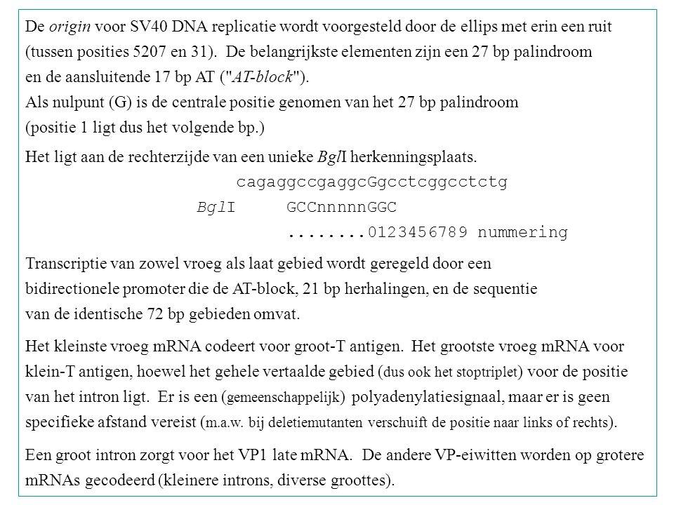 De origin voor SV40 DNA replicatie wordt voorgesteld door de ellips met erin een ruit