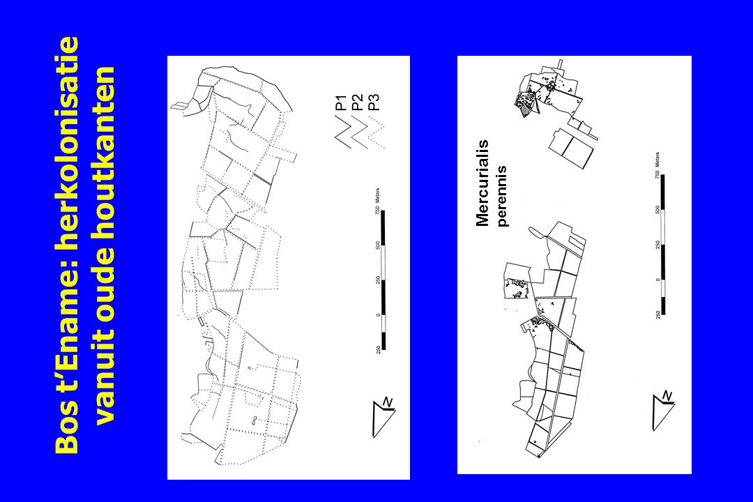 Bos t'Ename: herkolonisatie vanuit oude houtkanten
