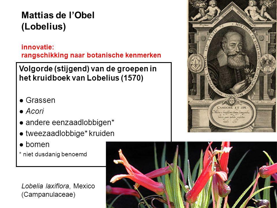 Mattias de l'Obel (Lobelius)