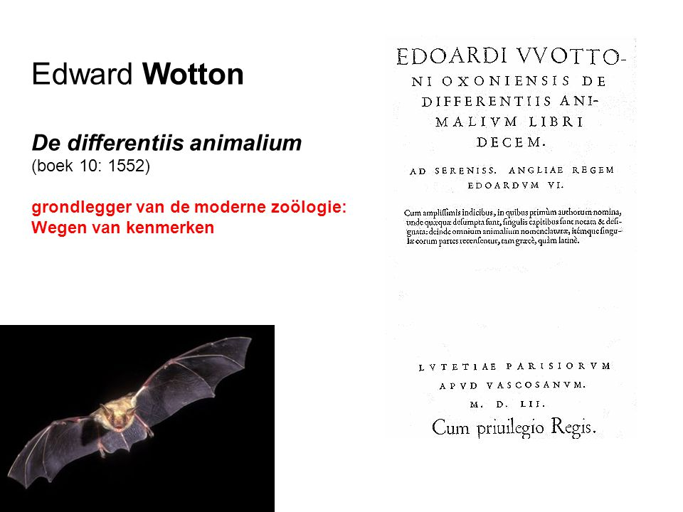 Edward Wotton De differentiis animalium (boek 10: 1552)