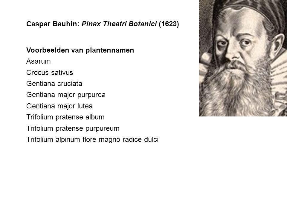 Caspar Bauhin: Pinax Theatri Botanici (1623)