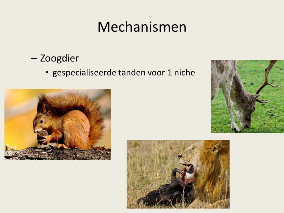 Mechanismen Zoogdier gespecialiseerde tanden voor 1 niche
