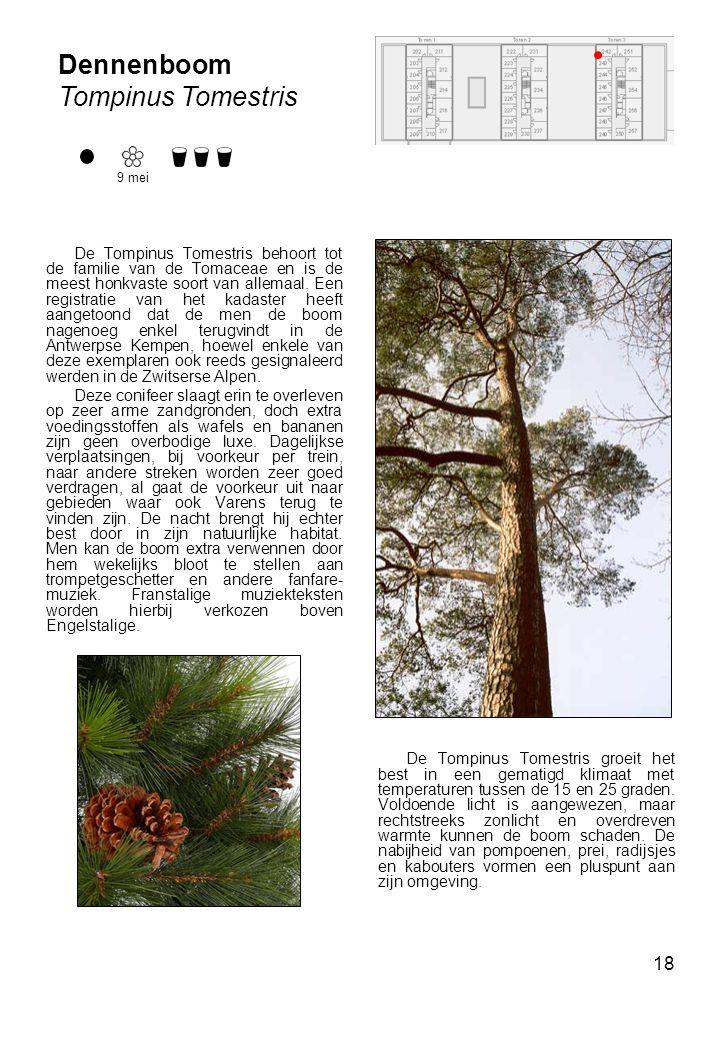 Dennenboom Tompinus Tomestris