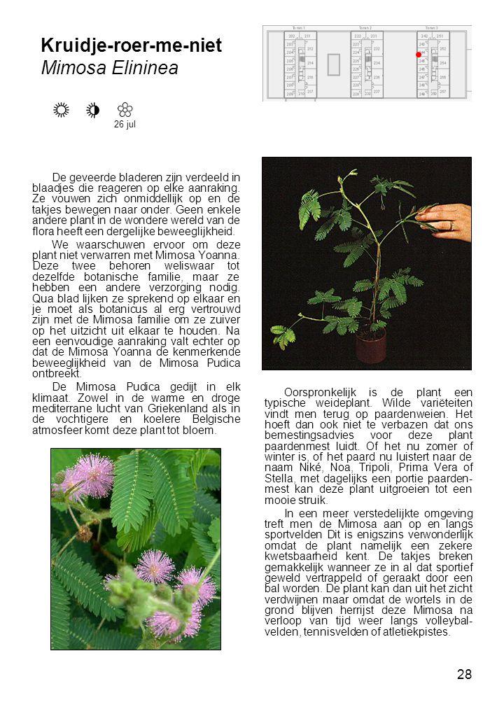 Kruidje-roer-me-niet Mimosa Elininea