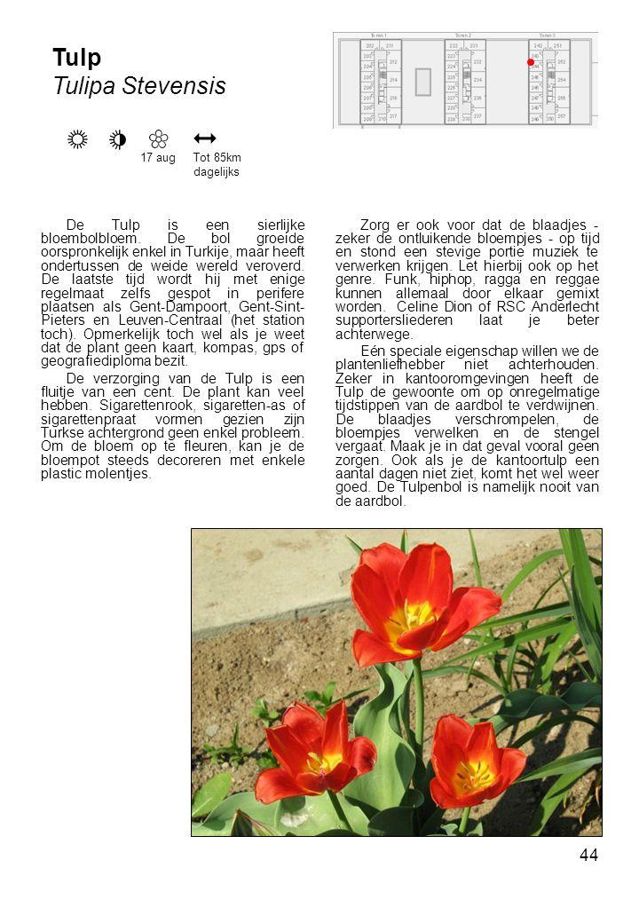 Tulp Tulipa Stevensis. 17 aug. Tot 85km dagelijks.