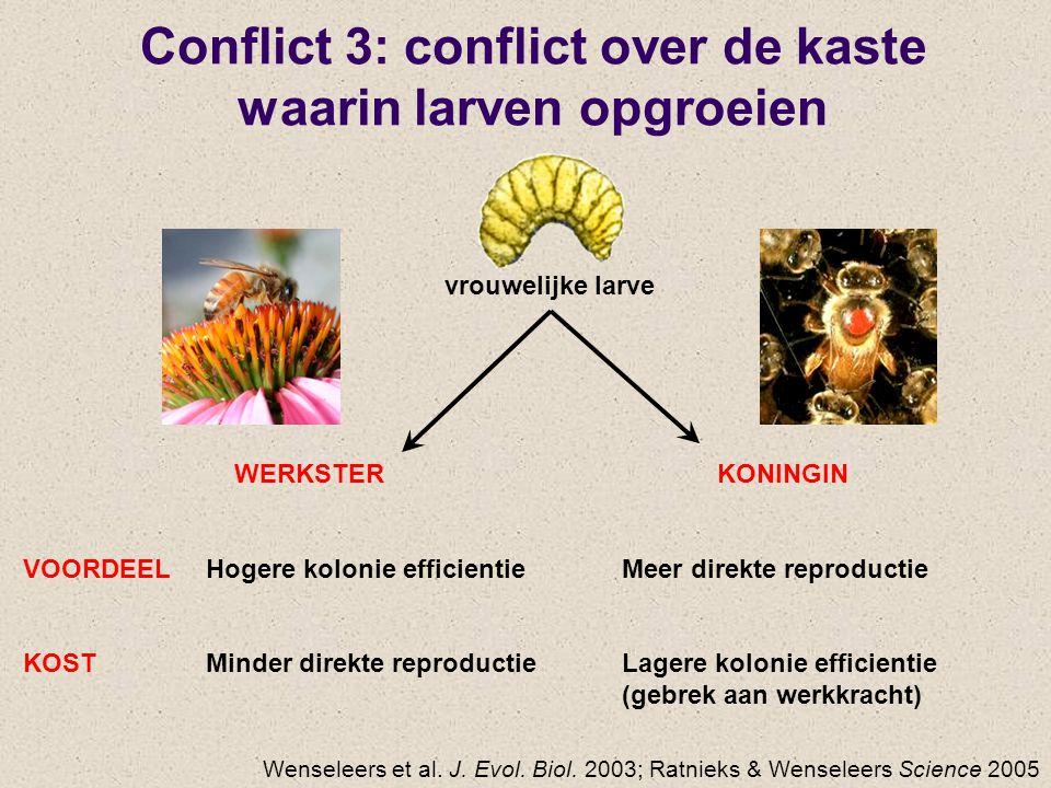 Conflict 3: conflict over de kaste waarin larven opgroeien