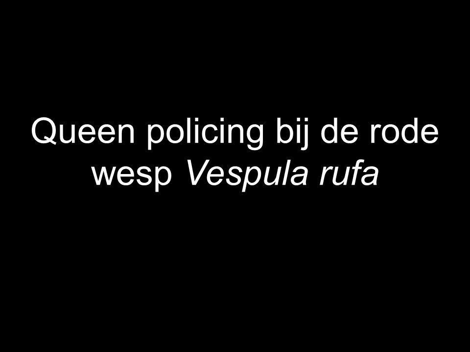 Queen policing bij de rode wesp Vespula rufa