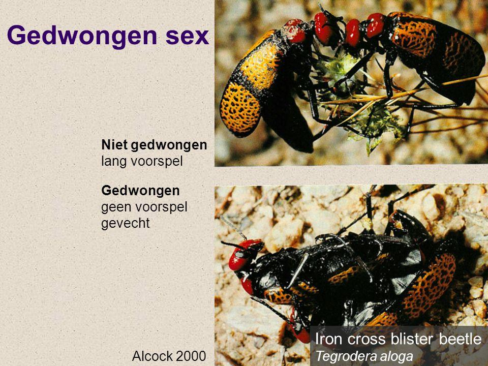 Gedwongen sex Iron cross blister beetle Tegrodera aloga Niet gedwongen