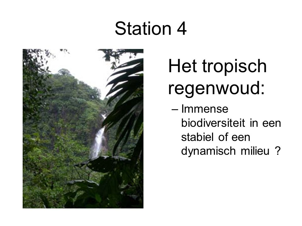 Het tropisch regenwoud: