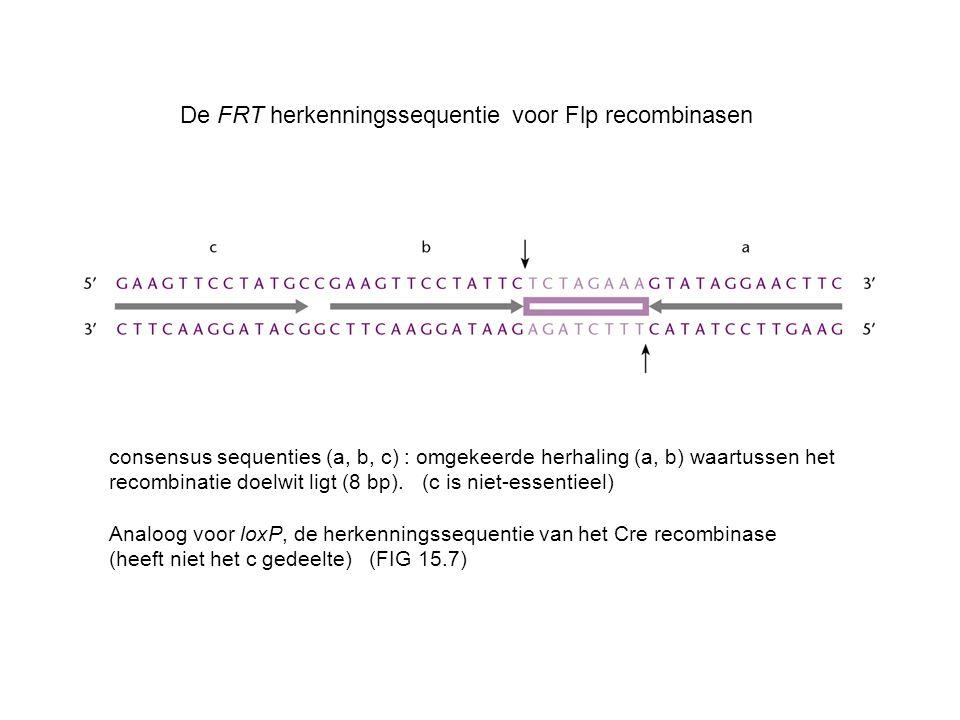 De FRT herkenningssequentie voor Flp recombinasen
