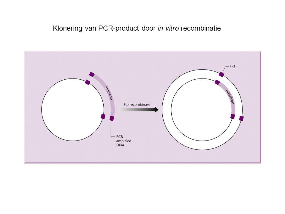 Klonering van PCR-product door in vitro recombinatie