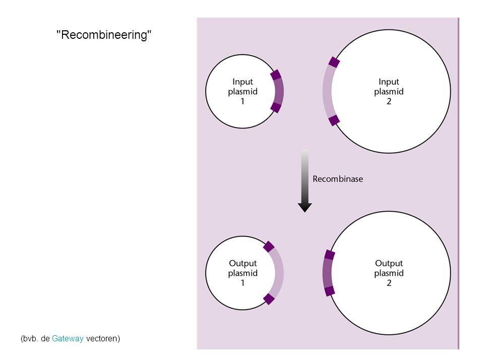 Recombineering (bvb. de Gateway vectoren)
