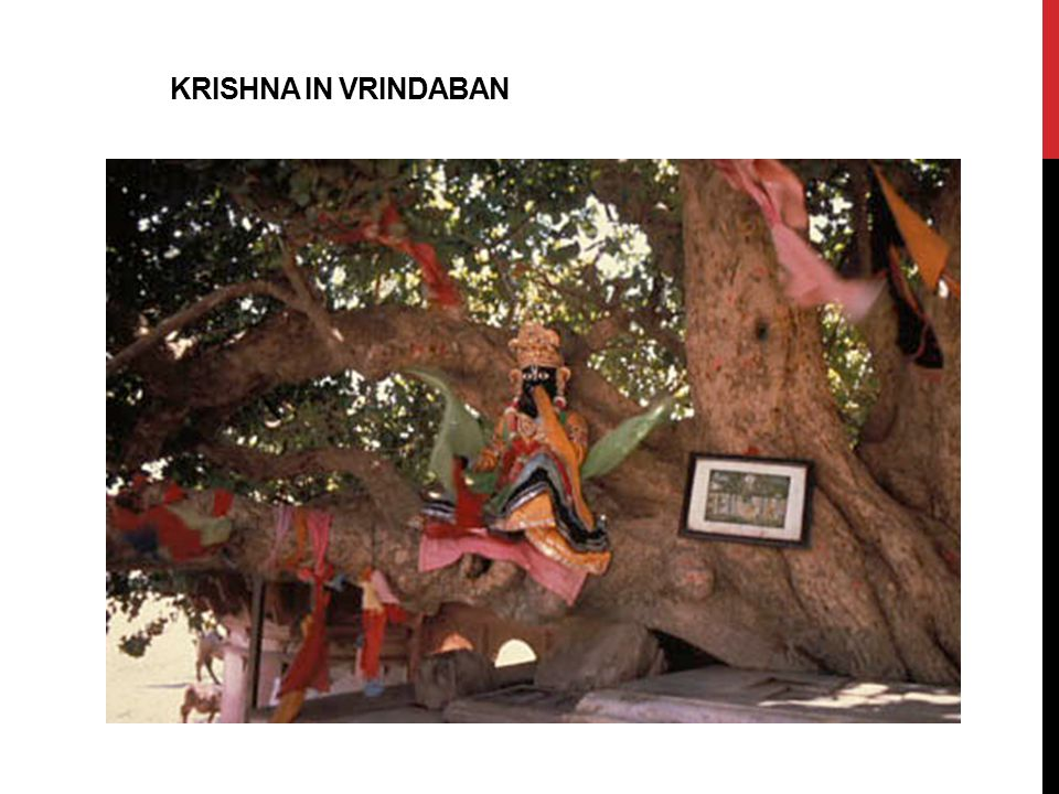 KRISHNA IN Vrindaban